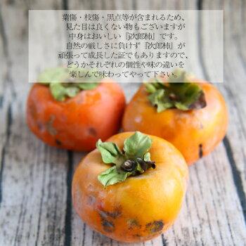 【柿】次郎柿1kg【みかんとの同梱販売限定】※多少の傷がございます。※こちらは同梱価格の次郎柿となります。ご注文の際はみかんと一緒にご注文下さい。※単品でのご注文の場合は、キャンセル処理をさせて頂きます。柿カキ
