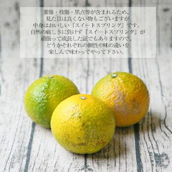 【スイート04】【☆数量限定☆】スイートスプリング4kg【多少の枝傷・葉傷・黒点等が含まれます。】みかんミカン蜜柑柑橘スイートスイートスプリング果物フルーツ