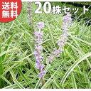 ■送料無料■【20ポットセット】 斑入りヤブラン 10.5c