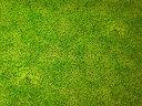 ぷらんぷ ちぃくす芝生でゴロン柄コットンプリント【 布 生地 草 自然 】