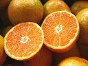 熊本みかん【わけありご家庭用】ふるさと果樹園のみかん10kg - 熊本のフルーツふるさと果樹園安田
