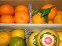 【訳あり】熊本の柑橘詰め合わせ【送料無料】3kg箱入りご予約承り中