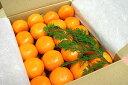 熊本青島みかん10Kgご予約限定品お届けは12月25日以降からとなります。 - 熊本のフルーツふるさと果樹園安田