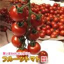 【送料無料】 限定販売/フルーツトマト 800g 熊本産 ミ...