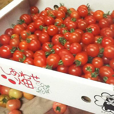ミニトマト 糖度8度以上 保証 朝採り/減農薬...の紹介画像2