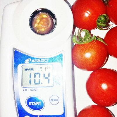 ミニトマト 糖度8度以上 保証 朝採り/減農薬...の紹介画像3