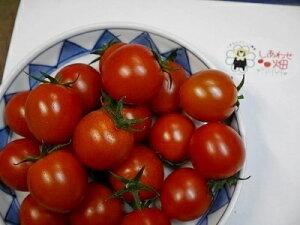 ミネラルミニトマト