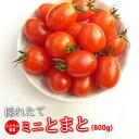 ミニトマト 糖度8度以上 保証 【送料無料】減農薬 トマト/