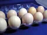 烏骨鶏卵【正規品】が1個あたり190円!烏骨鶏の卵 (うこっけいのたまご|ウコッケイのタマゴ...