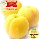 【2020/あす楽対応】山形県産 黄桃 2kg(ご家庭用/有