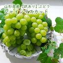 【訳あり】山形県産ぶどうシャインマスカット[2〜3房]...