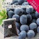 【訳あり】【冷凍】山形の完熟ブルーベリー1kg[箱入]