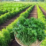 山形の伝統野菜うこぎ菜