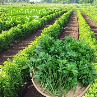 山形の伝統野菜うこぎ菜400g