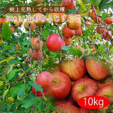 《訳あり》山形のふじりんご10kg(玉数おまかせ)