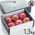レッドアップとまとソムリエトマト麗容1.3kg条件付き送料無料熊本ギフトプレゼント復興支援