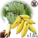 【今が旬】 沖縄県産 銀バナナ 約1.6kg Banana Party 甘みが強くほどよい酸味 自然