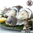 期間限定 隠岐のいわがき Lサイズ 10枚入り 3月から6月まで 送料無料 島根県 新鮮 魚介類 人気 贅沢