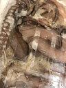 いかげそ(赤イカ) 10kg いか足君 【焼物・揚物・煮物・バーベキューなど用途色々】 国産イカゲソ 【冷凍便】 2