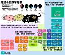 【国産牛】センマイ200g【内臓 ホルモン 焼肉 BBQ バーベキュー バーベキューセット 花見】 2