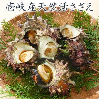 【H】壱岐産天然さざえ1Kg/