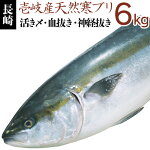 寒ブリ【6kg】壱岐天然