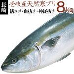 寒ブリ【8kg】壱岐天然
