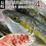 【K】1本釣り壱岐産天然ヒラマサ【4kg】