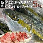 【K】【送料込】1本釣り壱岐産天然ヒラマサ【5kg】
