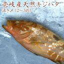 【H】壱岐 長崎 天然 キジハタ 1kg(2-3匹) 高級魚 あこう アコウ きじはた 雉羽太 アカミズ アカアラ 島 玄界灘 鮮魚 魚 刺身 洗い ひら造り 薄造り ポワレ 寿司 煮物 煮つけ 下処理済