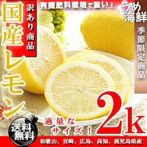 国産 レモン (サイズ未選別 有...