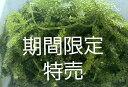 【茎付き】海ぶどう たっぷり2kg 沖縄料理 沖縄食材 刺し身 美味しい 海藻 お土産 おススメ商品