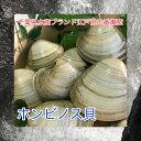 千葉県三番瀬産活ホンビノス貝L2kg【白ハマグリ、大アサリ】10〜14粒程度