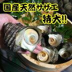 国産特大天然活きサザエ【大】1kg(4〜5個)