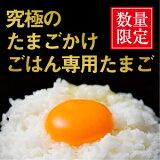 No.001究極のたまごかけごはん専用たまごご自宅用お買い得セット小20個入卵かけ 卵ご飯 卵かけご飯 たまごかけ たまごかけごはん 卵 ごはん たまごかけご飯 卵かけご飯 たまごかけ御飯 卵かけ御飯 醤油にぴったり たまごのソムリエ
