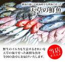 【送料無料】天草天然魚介類詰合せ 産地直送 ギフト のし対応 鮮魚 お刺身 煮魚 焼き魚 天草 熊本 九州
