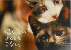 【映画パンフレット】 猫なんかよんでもこない。 監督 山本透 キャスト 風間俊介、つるの剛士、松岡茉優、内田淳子、矢柴俊博、市川実和子