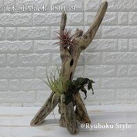 流木_小型流木(流木とフェイクグリーン3個のセット)RS0159