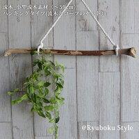 流木_小型流木素材(〜59cm)ハンギングタイプ(流木とロープのセット)RS0177