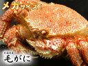 北海道産1尾800g前後のメガ毛ガニ!