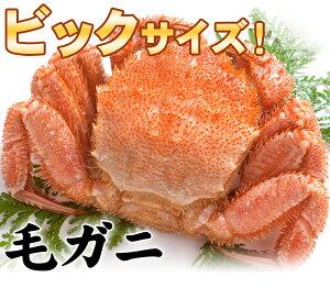 毛ガニでこの大きさなら食べ応え満点!繊細なあま〜い身肉と濃厚なカニ味噌♪ボリューム満点!1...