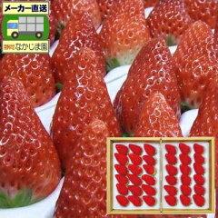 静岡生まれの極上イチゴ「あきひめ苺」静岡生まれの極上中粒苺(いちご)[36粒・800g以上]