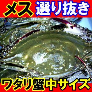 メス選り抜きワタリガニ活〆生中(標準)サイズ1,2kg(3-5尾)