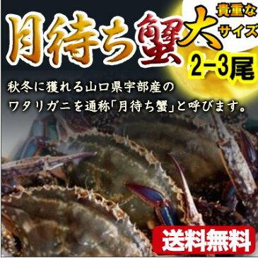 ワタリガニオスメス問わず約1kg大サイズ生(2−3尾)送料無料渡り蟹、わたりがに、ガザミ