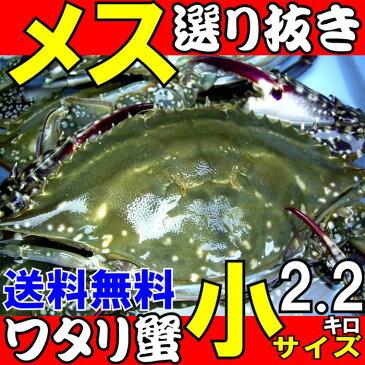 ワタリガニ メス選り抜き生小サイズ約2、2kg(8−10尾)送料無料わたりがに、渡り蟹、ガザミ