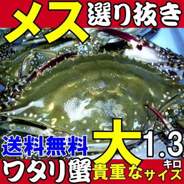 ワタリガニ メス選り抜き大サイズ生約1,3kg(3尾)送料無料わたりがに、渡り蟹、ガザミ