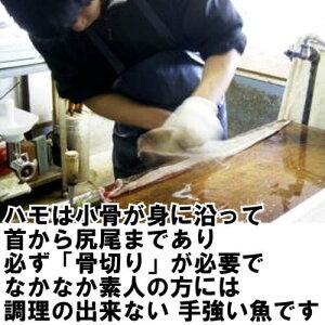 瀬戸内海産鱧(はも)湯引き3人前送料無料!【イキ〆,はも,鱧,ハモ】
