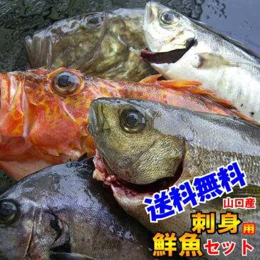 お刺身用厳選刺身用ウハウハ鮮魚セット【刺身 盛り合わせ】旬の魚 詰め合わせ魚を捌ける方専用