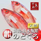 のどぐろ日本海産600g以上・2尾(冷凍)送料無料
