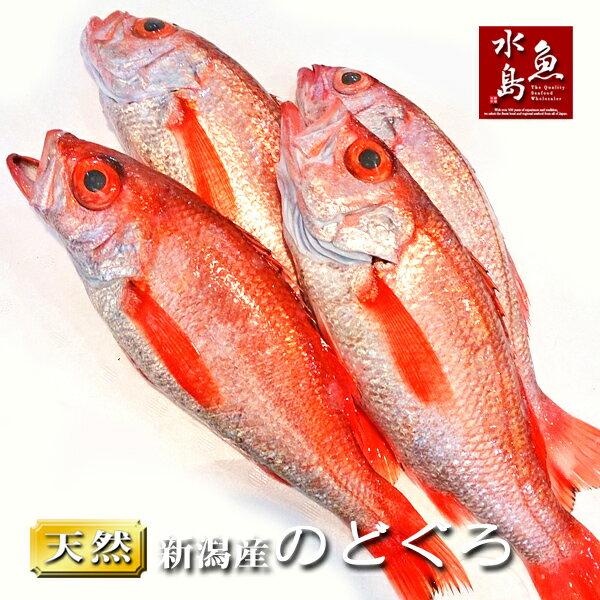 のどぐろ 新潟・日本海産 ノドグロ 300g以上・4尾(生冷凍)